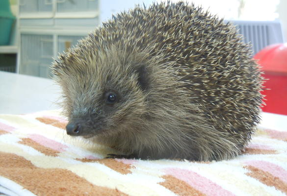 Hospital Equipment for Selby Hedgehog Haven