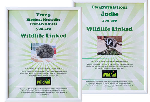 Wildlife Link in the Community